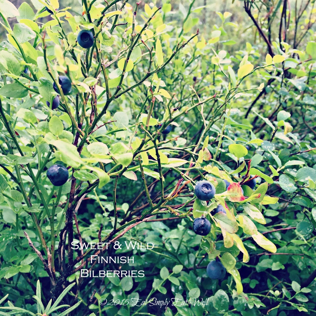 Bilberries_20150727